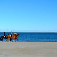 Horses Helping Horses, Fall Beach Ride for the MSPCA at Nevins Farm – October 27th