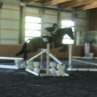 Lower Level Event/Dressage/Trail Horse For Sale