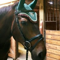 Novice Event Horse for Part Lease