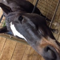 Beautifully Built TB Mare with Potential Written All Over!